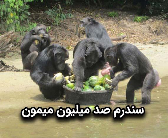 سندرم صد میلیون میمون